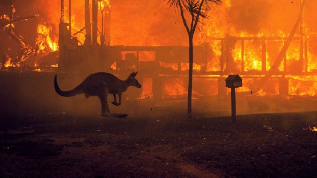 twip-01-kangaroo-fires-ps-200102_hpMain_1_16x9_992 (1)